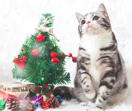 圣诞节特辑