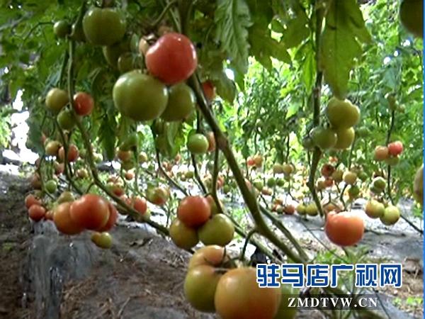 汝南电视台_汝南高中举办高三冲刺大型励志演讲报告会驻
