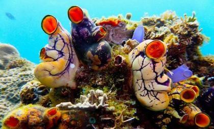科学家在菲律宾海域发现100种海洋新物种,美国加州科学院无脊椎动物馆图片