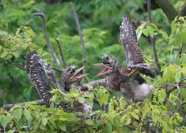 松雀鹰等国家二级保护动物