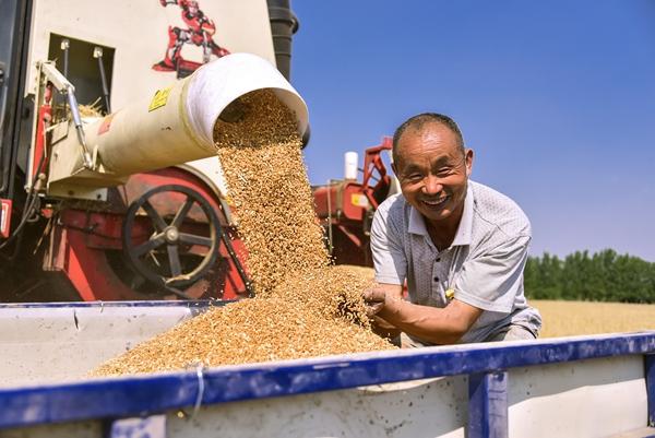 正阳:抢收小麦 颗粒归仓