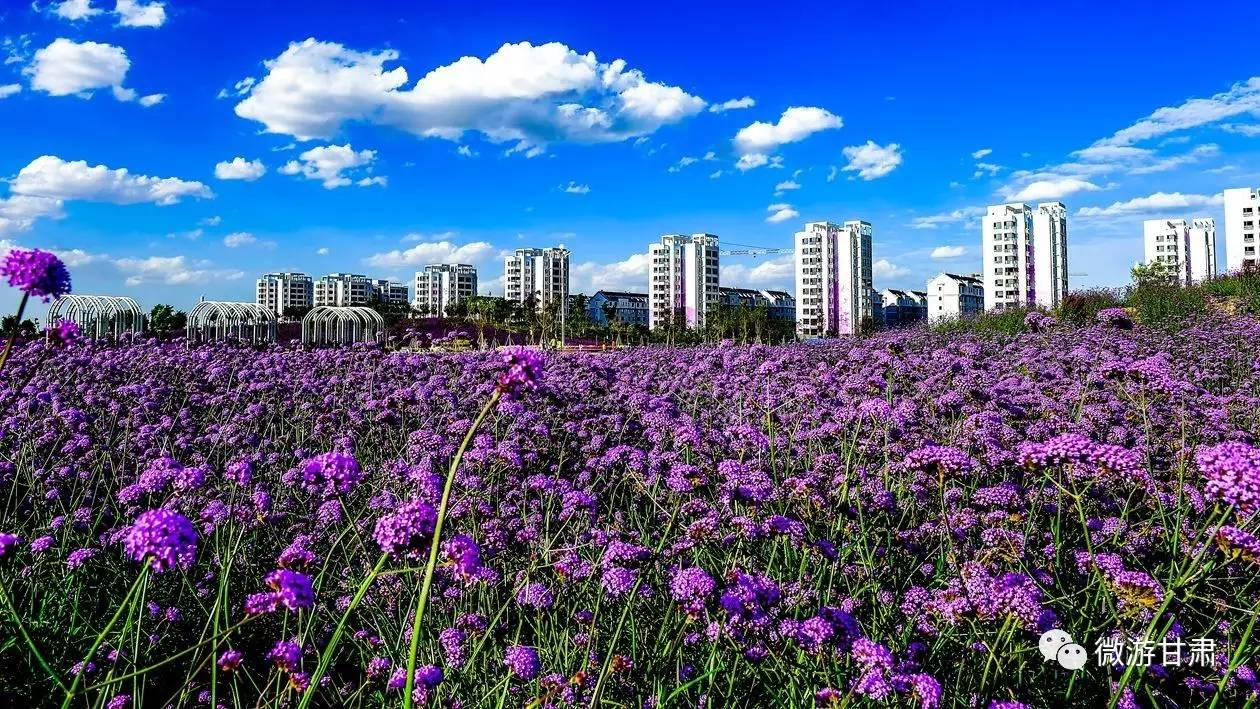紫色城市壁纸风景高清