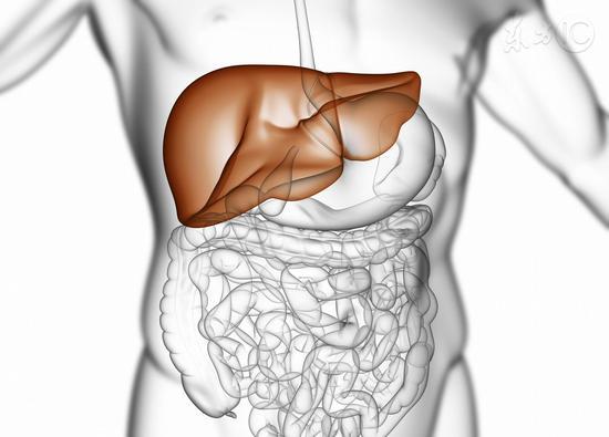 保养肝脏六大秘方