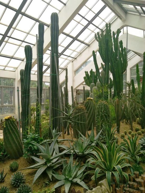 > 正文  植物园里放眼望去简直就像是郁郁葱葱的小森林,每个角度看