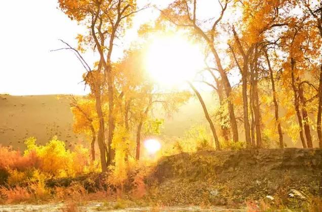 壁纸 风景 森林 树 杨树 桌面 636_419