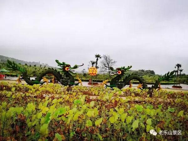 胡海洋 郝科铭)10月1日,驻马店老乐山风景区大型菊花展开幕了.