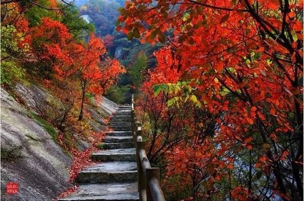 地址:河南省林州市石板岩乡太行大峡谷 老君山以植被丰富闻名,这里的