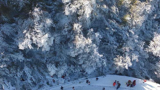 重庆金佛山银装素裹雪景美如画