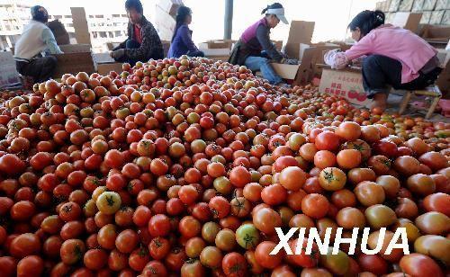 核心提示:2017年,青岛口岸共出口蔬菜100.78万吨,货值9.