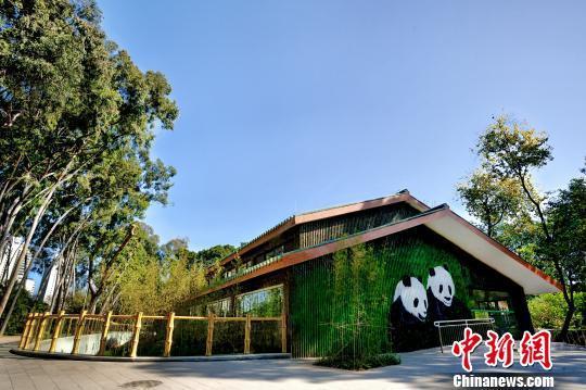 广州动物园大熊猫馆改造升级后对外开放--驻马店新闻