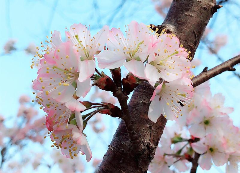 春风拂面气温舒适,驻马店各公园广场花卉争相开放。