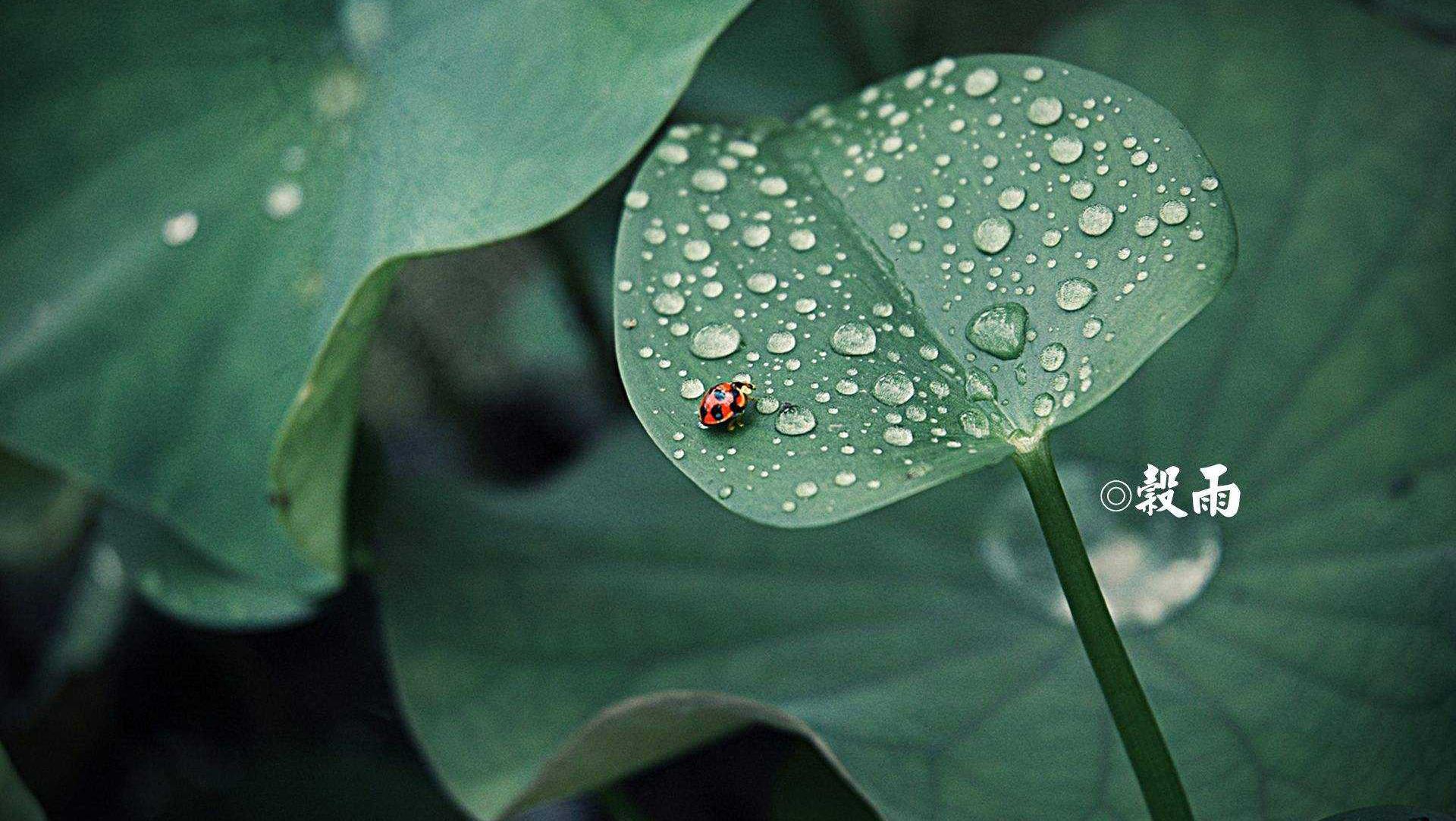春天的最后一个节气 各地谷雨有哪些民俗?