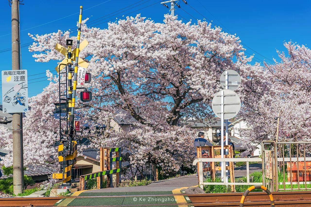 今年3月29日-4月7日 大阪、奈良、京都、名古屋,我经历了一场恍如梦境的樱花之旅游。日本樱花季旅游 摄影师:KeZhongzhou