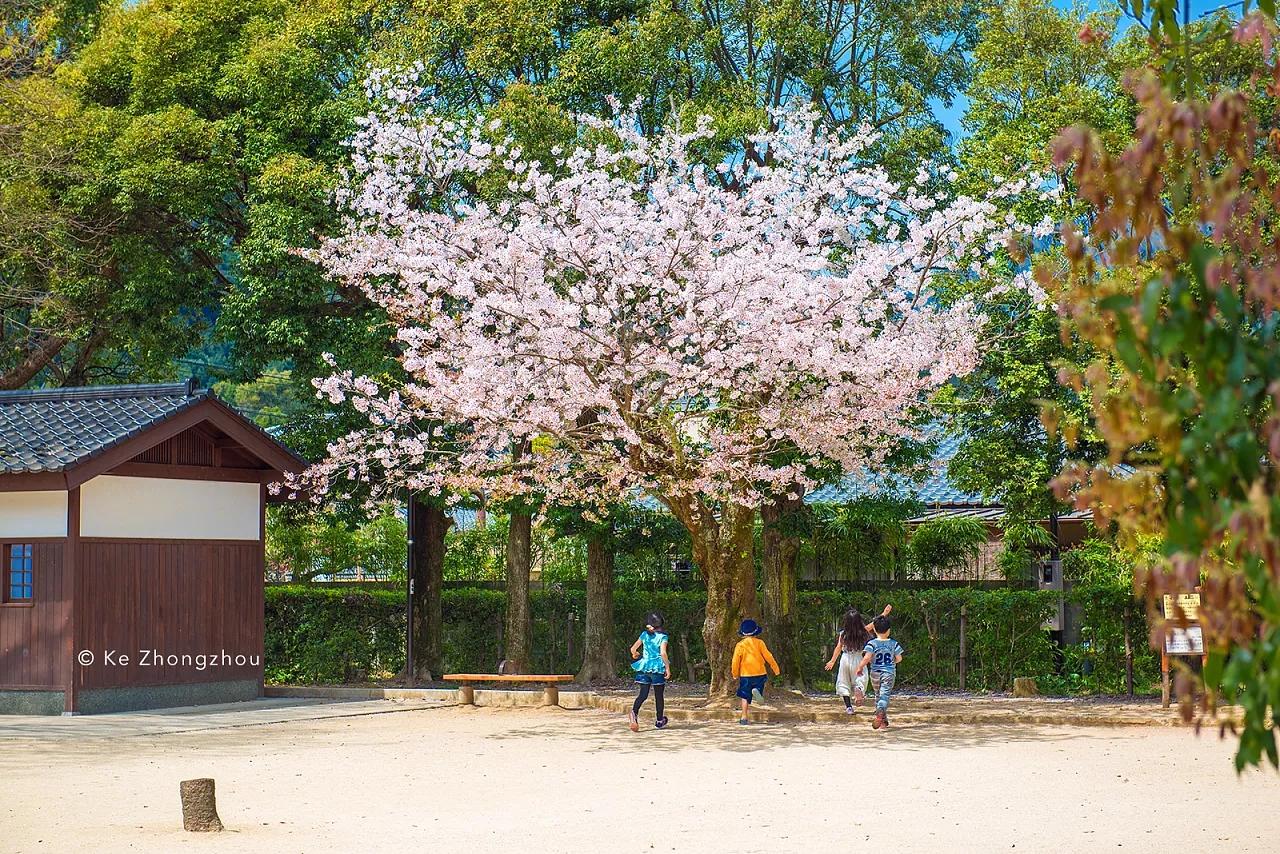 日本樱花季旅游 摄影师:KeZhongzhou
