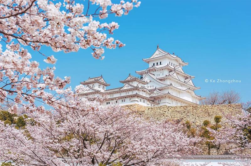 日本樱花季旅游