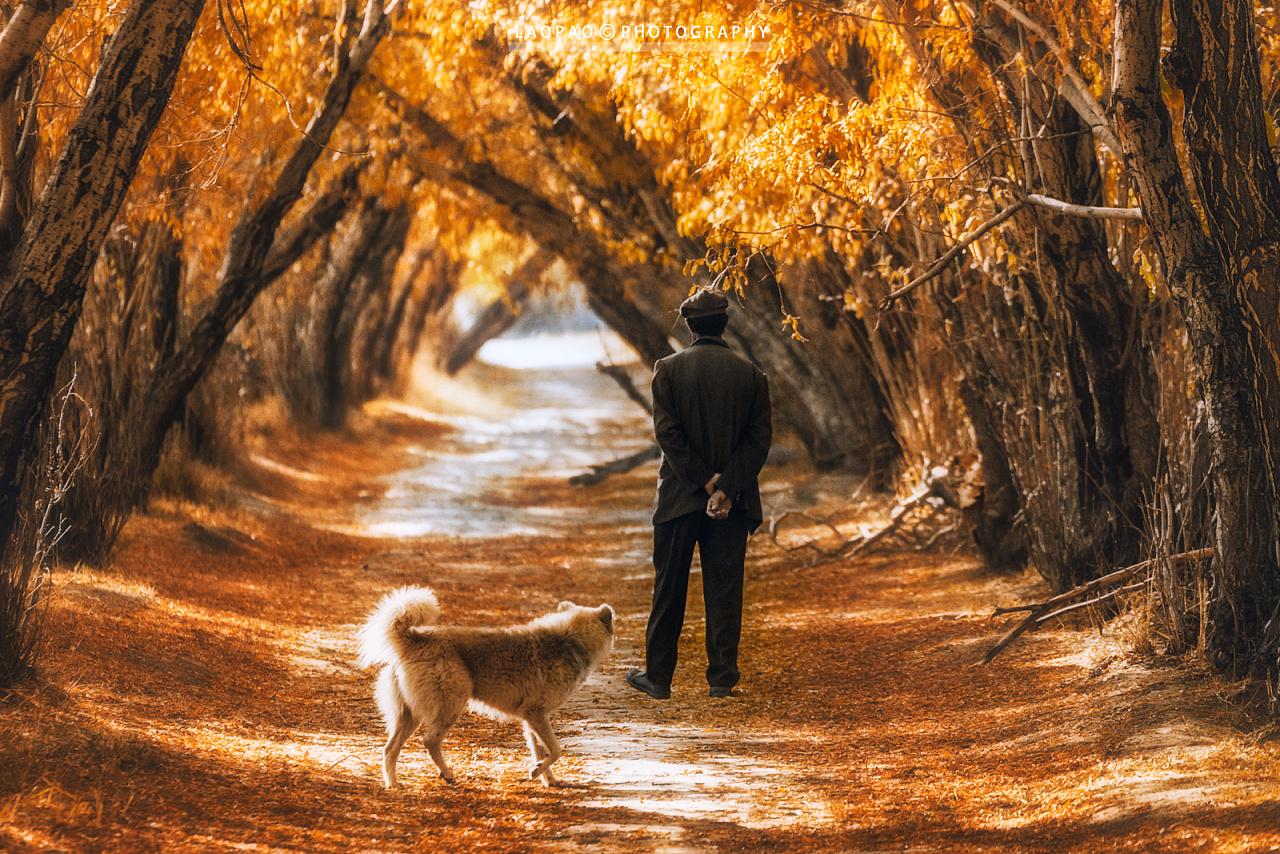 帕米尔高原的秋天 摄影师:老炮叔叔