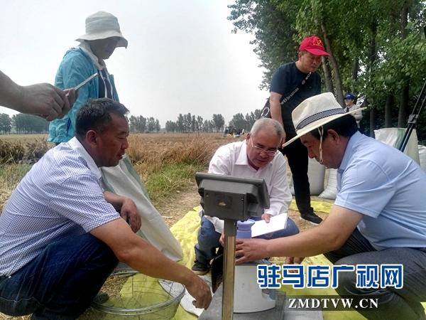 市农业专家对部分麦块进行实打验收