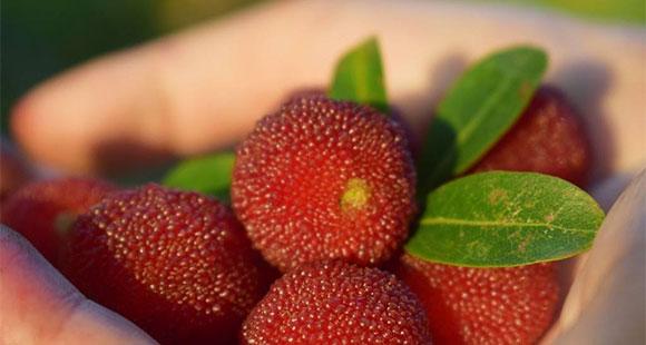 血红素补铁补血、虾青素能抗氧化 红色食物益处多