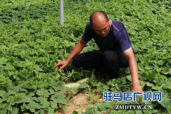 褚市魏庄:特色农业种植再添新活力