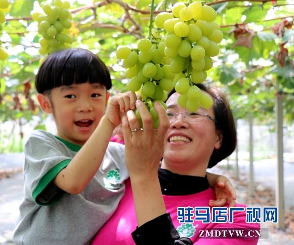 杰美葡萄庄园打造亲子教育基地 让孩子体验农作的乐趣