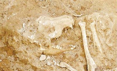 考古发掘出的动物遗存里藏着哪些秘密
