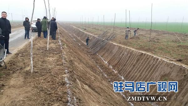 汝南县三桥镇利用冬闲 积极实施国土绿化