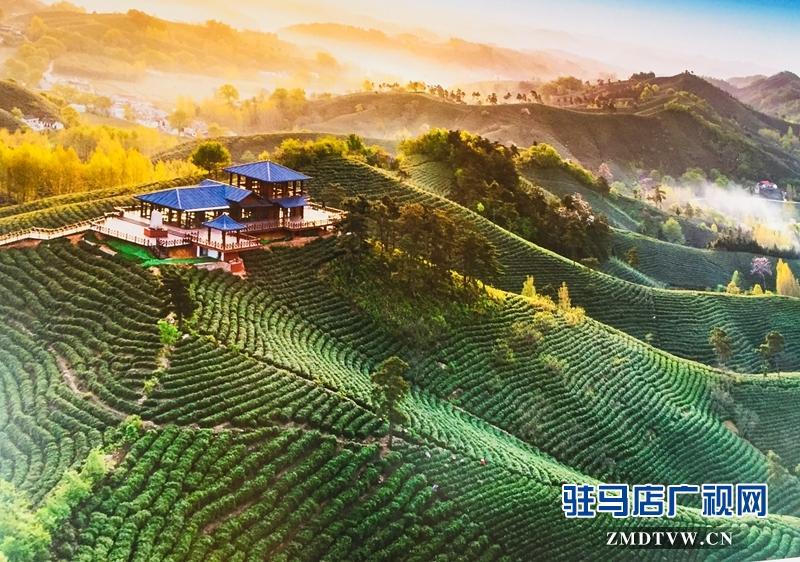 龙潭村万亩茶园(摄影/王东红)