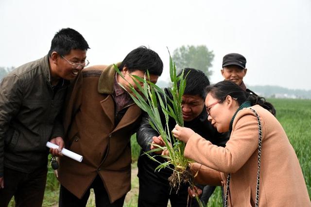 正阳:新型职业农民培训跟踪问效到田头