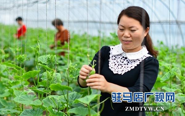 正阳县永兴镇:产业扶贫助农增收