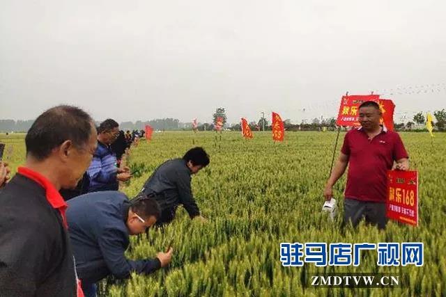 上蔡县召开小麦品种现场观摩会