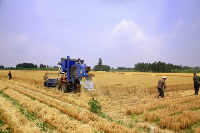 """驻马店市 """"三夏""""机收小麦已经过半"""