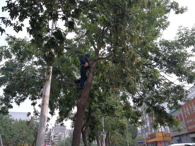 驻马店市园林部门对中心城区干枯树枝进行清理
