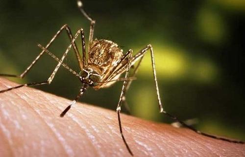 屋子里放一杯糖水真能驱蚊,科学家发现不让蚊子咬你的秘密