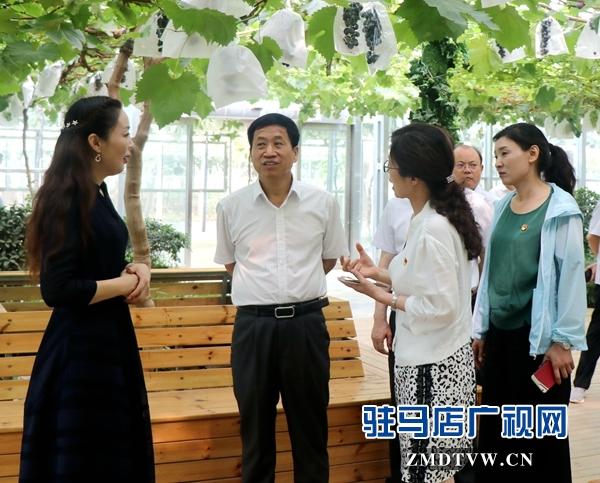市人大常委会调研组到遂平县杰美葡萄庄园进行调研