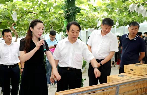 省政协副主席张亚忠到遂平县杰美葡萄庄园调研休闲农业发展工作