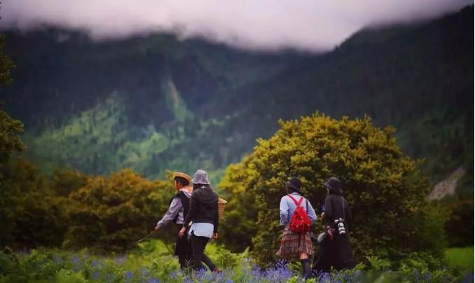 香格里拉松茸之旅 美食美景社交融为一体