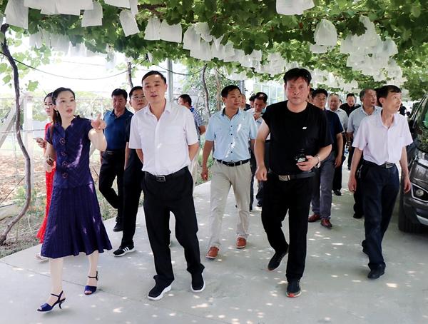 河南省农科系统(中南片) 专家组到杰美葡萄庄园参观交流