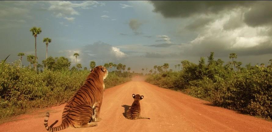 幼虎出逃死了,从业者慌了:保护与表演矛盾愈发突出,何去何从?