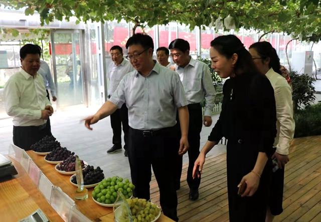 国家葡萄产业技术体系助力脱贫攻坚与杰美庄园SOD葡萄现场观摩会举行