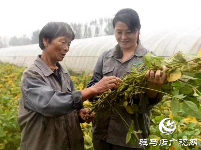 """驻马店天中生态农业:努力为天中人民打造放心的""""菜篮子"""""""