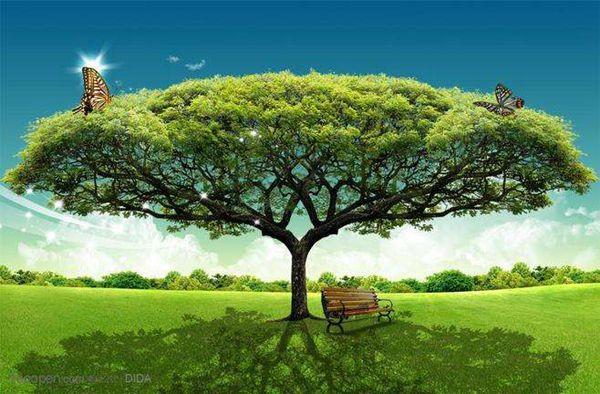 心中的亲情树