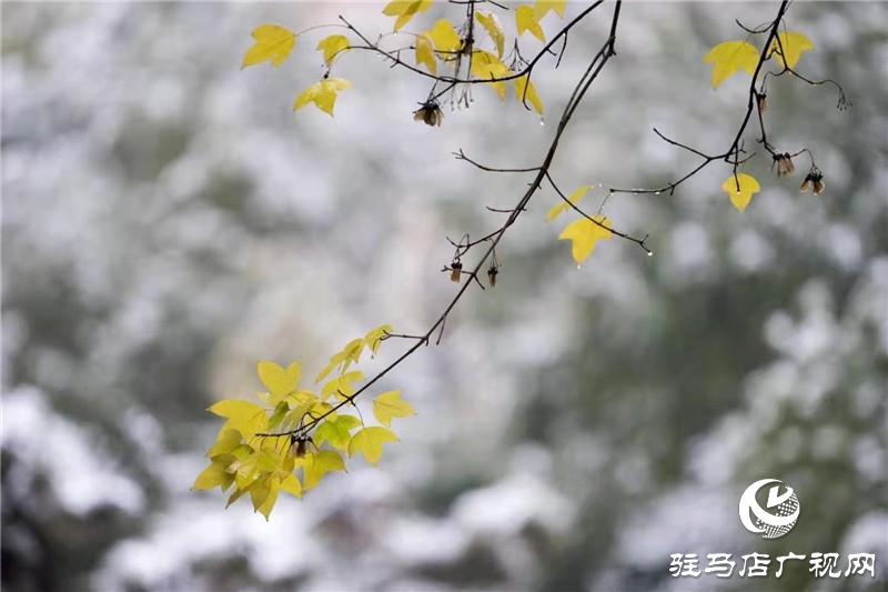 摄影/王向阳