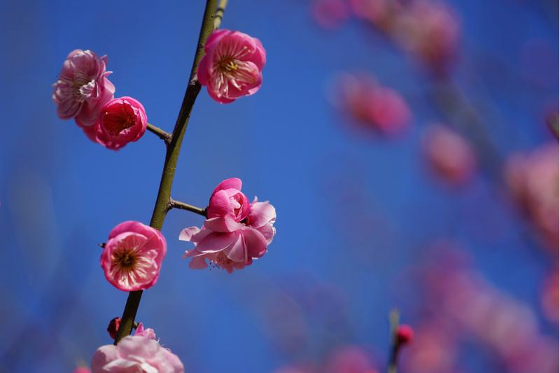 疫情之下的驻马店,春天正如约走来,再等等…我们一起看满城花开
