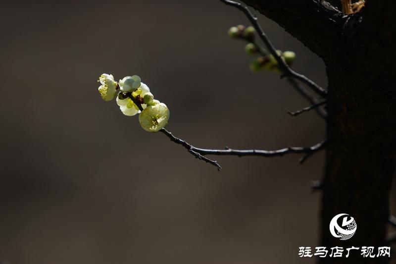 花的盛开,等待了一冬
