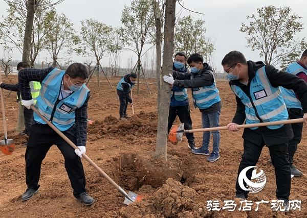 中建七局中原建设公司上蔡片区项目开展义务植树活动