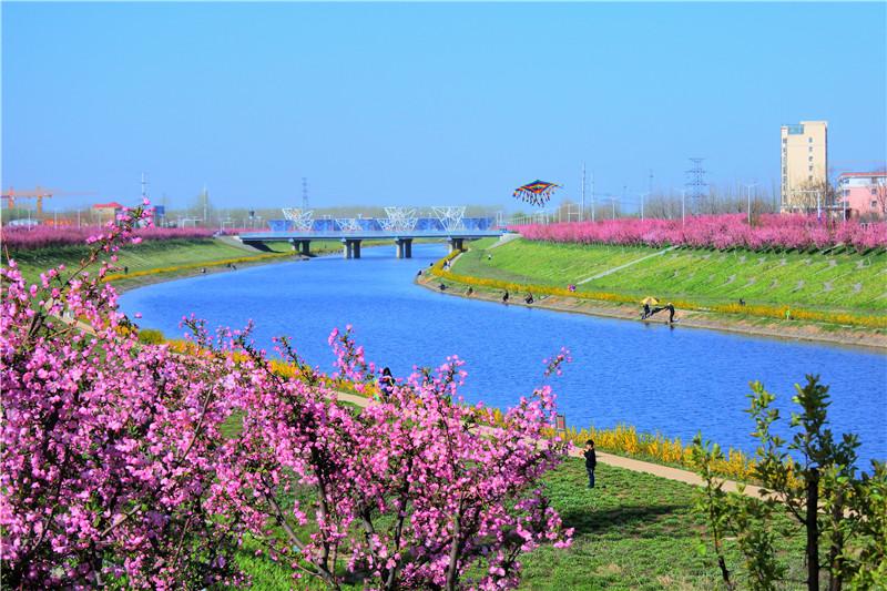 海棠花开,美了整座西平城