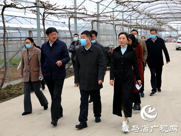 副市长刘晓文到遂平县调研农产品生产运营情况