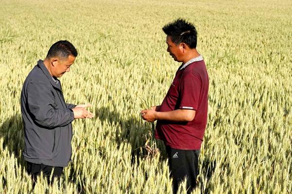 泌阳:创新流转服务新模式 激发农业生产新动力