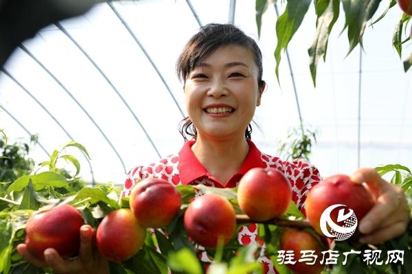 党员为农产品代言,政协助力脱贫攻坚