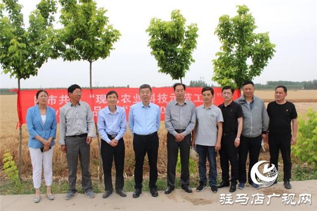 驻马店市农科院组织专家对驻麦305开展田间测产